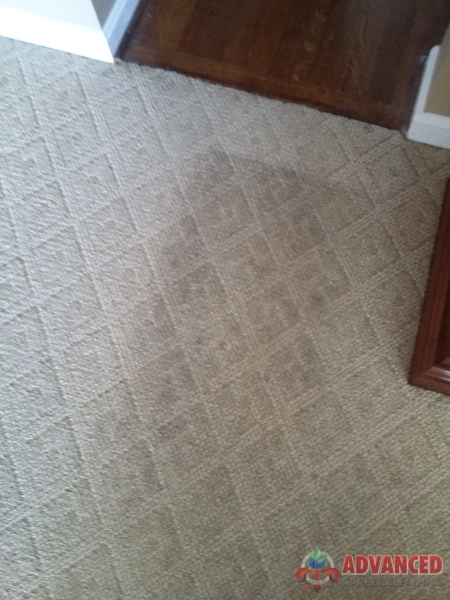 Area Rug Cleaning Louisville Ky Rugs Ideas