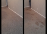 advanced_carpet_cleaning_petstainremoval