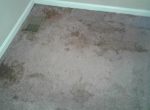residential-carpet-cleaning-job-001